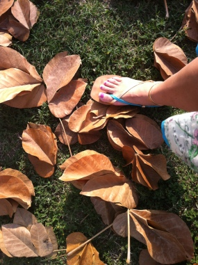 Crunching through the massive leaves of the French Peanut tree